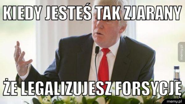Justyna Bargielska Legalizacja forsycji