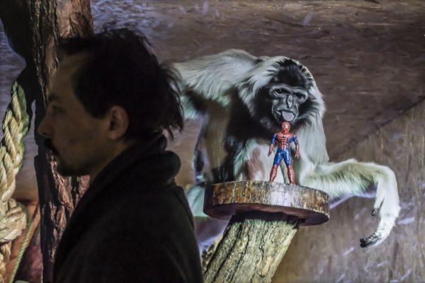Adam Jastrzębski Transkultura hominidów + gibonów