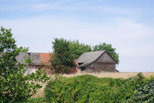Opuszczona parcela w Charcicach, fot. Michał Kruszona